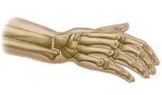 El bileği kırıkları tedavisi nasıl yapılır - Prof Dr.Eftal Güdemez